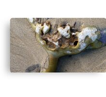 Clinging on to life! Seaweed - New Zealand - Catlins Canvas Print