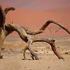 Acacia Skeleton, Namib Desert by Caroline Bland