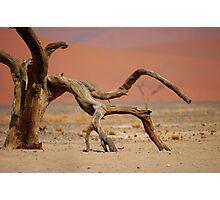 Acacia Skeleton, Namib Desert Photographic Print