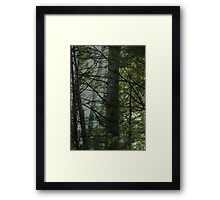 0065 - HDR Panorama - Owl 1 Framed Print