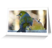 Flutter! - Silvereye - Wax Eye - New Zealand Greeting Card