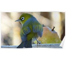 Flutter! - Silvereye - Wax Eye - New Zealand Poster