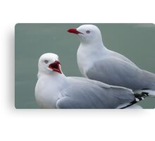 What's going on! Seagull - Port Chalmers Otago New Zealand Canvas Print