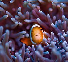 Nemo by vinny turner