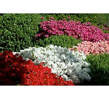 Flower Beds Photographic Print