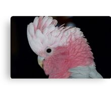 Do you like my hair do! - Rose-Breasted Cockatoo - New Zealand Canvas Print