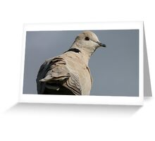 You still there? I'm leaving -  African Collared Dove - Gore - New Zealand Greeting Card