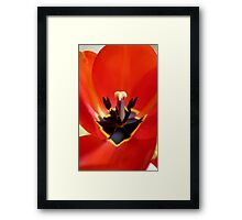 Red Center! - Red Tulip - NZ - Southland Framed Print