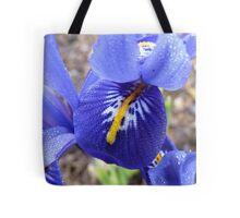 Purple Blue & Yellow Beauty - Iris Histrioides - Gore Gardens - New Zealand Tote Bag