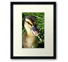 I have arrived! - Duckling - NZ - Southland Framed Print