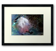 Feather & Pearl - Southland - New Zealand Framed Print