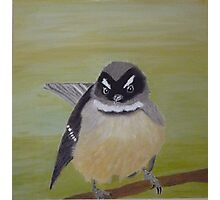 Fantail oil Painting - NZ - Southland Photographic Print