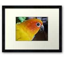What can I say! - Sun Conure - NZ ** Framed Print