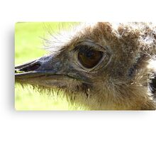 The Eye of Emu - NZ - Invercargill - Southland Canvas Print