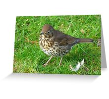 Who left these feathers! Song Thrush - New Zealand Greeting Card
