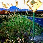 New Zealand North Island  by kevin smith  skystudiohawaii