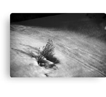 Rabbit Brush in Snow Canvas Print