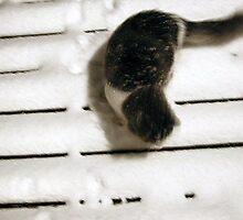 Snow Cat by JMacsRUs