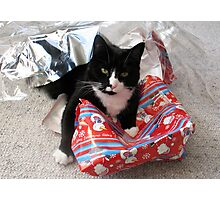 Christmas is for Cats Photographic Print