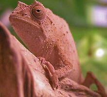 Dwarf Leaf Chameleon by Zooguy