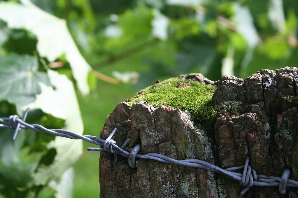 Wire Wood and Moss by Larry149