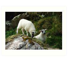 Roadside Lambs Art Print