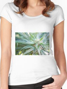 Cannabis flower and leaves  Women's Fitted Scoop T-Shirt