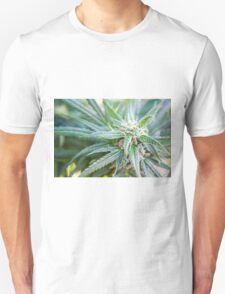 Cannabis flower and leaves  T-Shirt