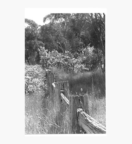 Old Fence Trunkey Creek Photographic Print
