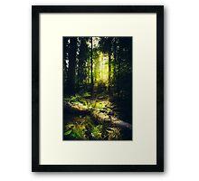 Down the dark ravine Framed Print