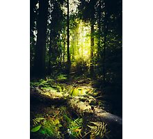 Down the dark ravine Photographic Print