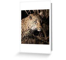 Leopard(kikilezi) on the hunt Greeting Card