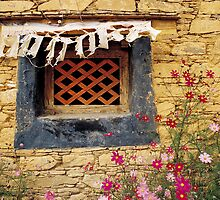 Window and pink cosmos by jamiew