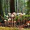 Fungi and trees challenge.