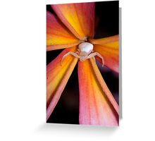Crab Spider on Frangipani 2 Greeting Card