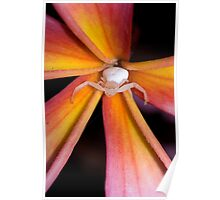 Crab Spider on Frangipani 2 Poster