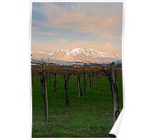Fresh Vines Poster