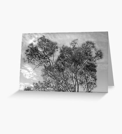 tracery of trees Greeting Card