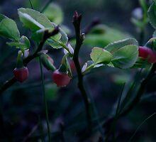 Spring Blueberrys by Oceansoul27