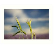 Ears of barley Art Print