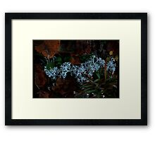 0097 - HDR Panorama - Lichen 3 Framed Print