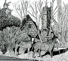 136 - TINKER'S HORSES AT CARTRONTROY - INK - 1987 by BLYTHART
