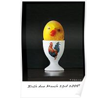 Egg and Chick Poster