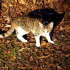 fraidy cat by marshaann
