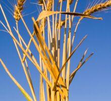 Ripe wheat stalks on a blue sky background  Sticker