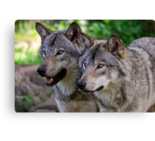 Forest Guardians  Canvas Print