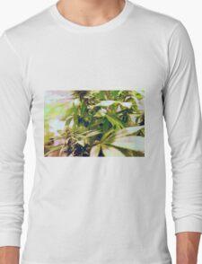 Skunk marijuana plants (Cannabis sativa) being grown in pots Long Sleeve T-Shirt