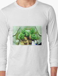 Home Grown Cannabis plants.  Long Sleeve T-Shirt