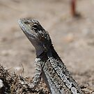 Lizard by KeepsakesPhotography Michael Rowley