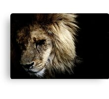 tears of a lion king-2 Canvas Print